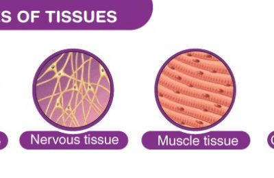 Synopsis on Tissues